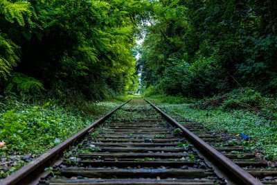 Railroad in Nature